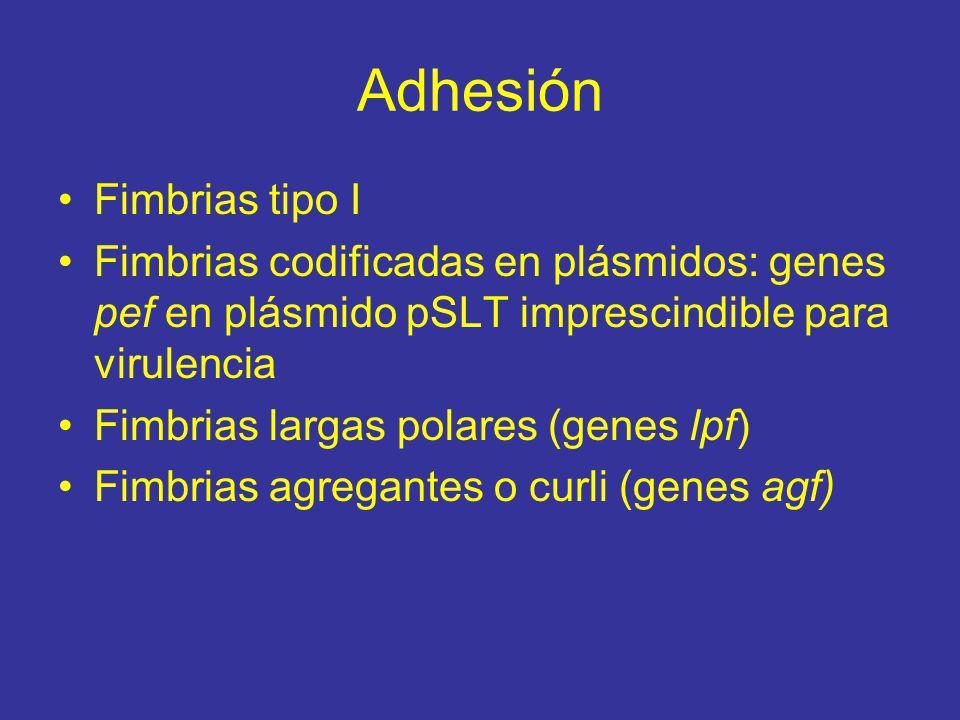 Adhesión Fimbrias tipo I Fimbrias codificadas en plásmidos: genes pef en plásmido pSLT imprescindible para virulencia Fimbrias largas polares (genes lpf) Fimbrias agregantes o curli (genes agf)