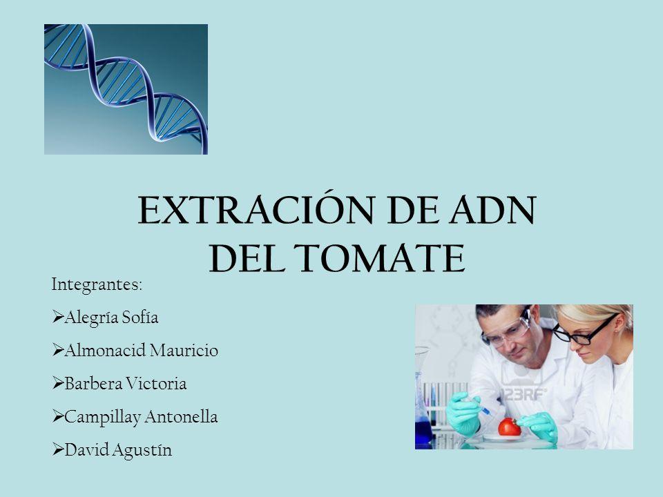 EXTRACIÓN DE ADN DEL TOMATE Integrantes: Alegría Sofía Almonacid Mauricio Barbera Victoria Campillay Antonella David Agustín