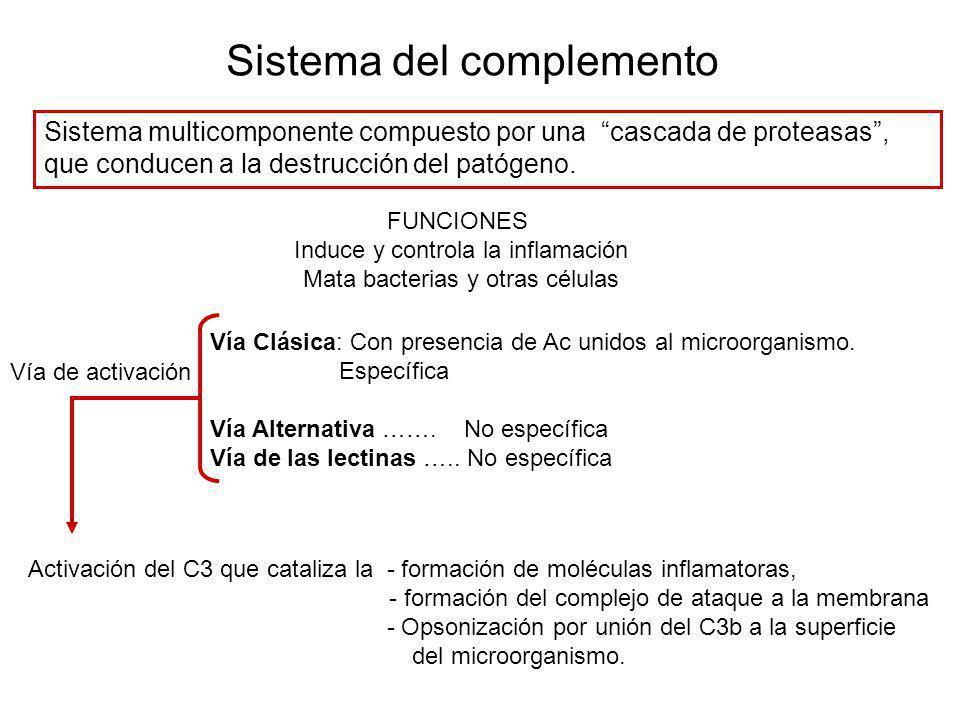 Sistema del complemento Sistema multicomponente compuesto por una cascada de proteasas, que conducen a la destrucción del patógeno. FUNCIONES Induce y
