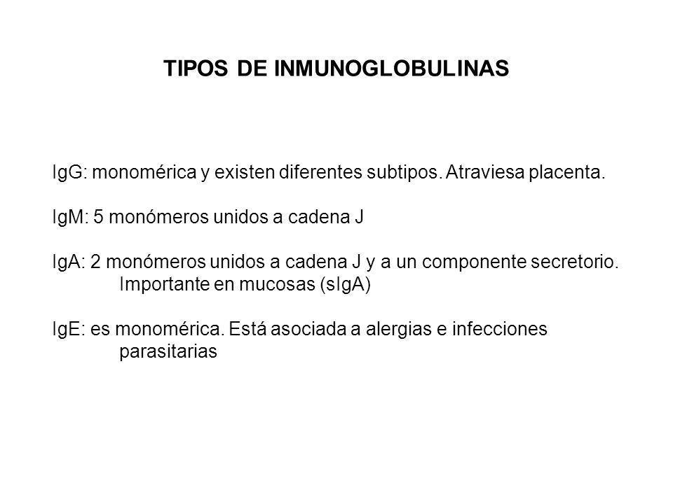 IgG: monomérica y existen diferentes subtipos. Atraviesa placenta. IgM: 5 monómeros unidos a cadena J IgA: 2 monómeros unidos a cadena J y a un compon