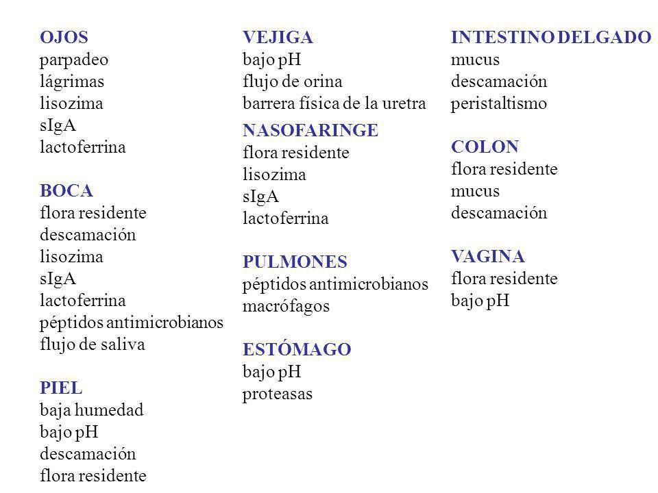 OJOS parpadeo lágrimas lisozima sIgA lactoferrina BOCA flora residente descamación lisozima sIgA lactoferrina péptidos antimicrobianos flujo de saliva