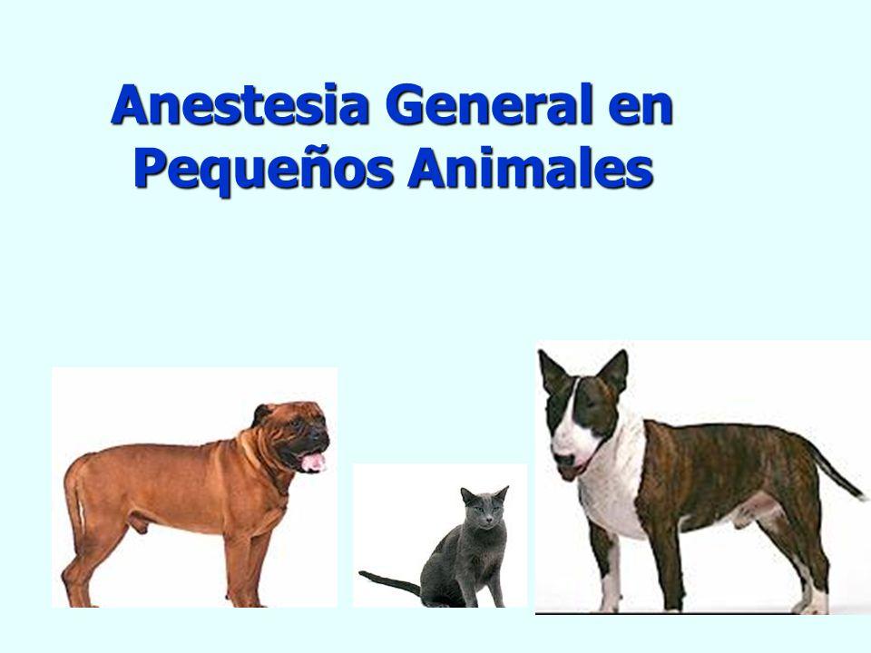 Anestesia General en Pequeños Animales