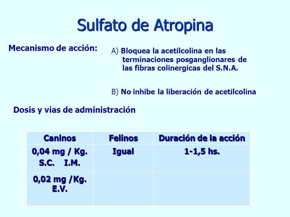 Sulfato de Atropina CaninosFelinos Duración de la acción 0,04 mg / Kg. S.C. I.M. Igual 1-1,5 hs. 0,02 mg /Kg. E.V. Mecanismo de acción: A) Bloquea la