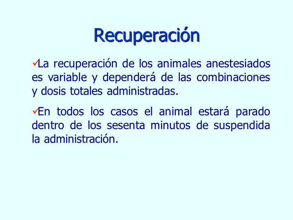 Recuperación La recuperación de los animales anestesiados es variable y dependerá de las combinaciones y dosis totales administradas. En todos los cas