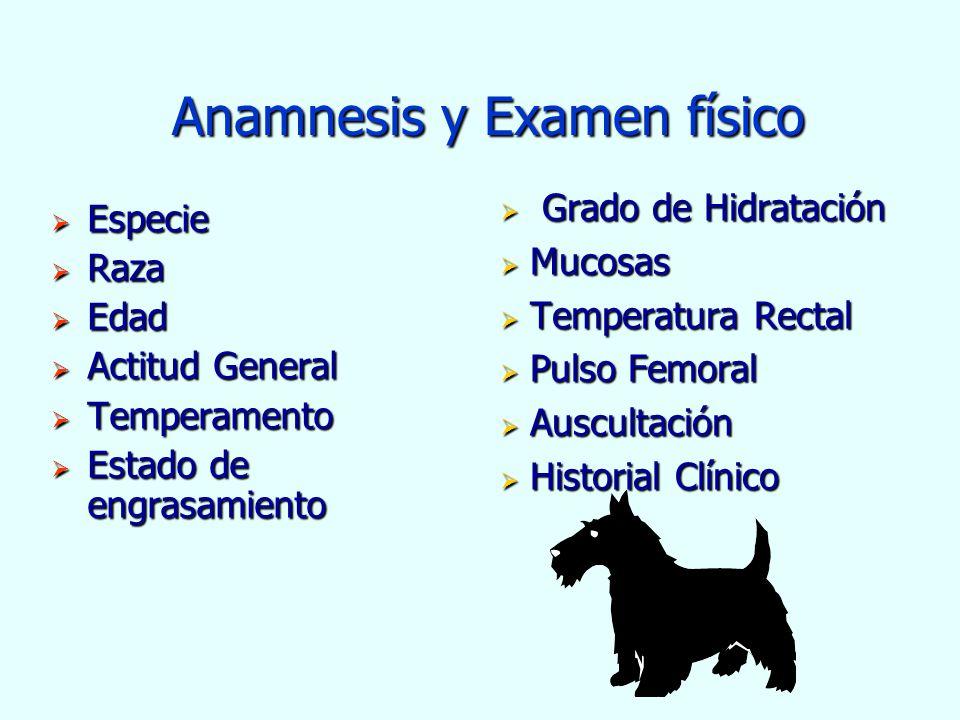 Anamnesis y Examen físico Anamnesis y Examen físico Especie Especie Raza Raza Edad Edad Actitud General Actitud General Temperamento Temperamento Esta