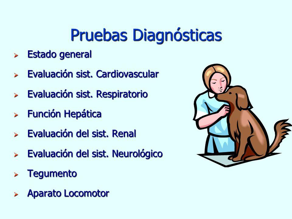 Pruebas Diagnósticas Estado general Estado general Evaluación sist. Cardiovascular Evaluación sist. Cardiovascular Evaluación sist. Respiratorio Evalu