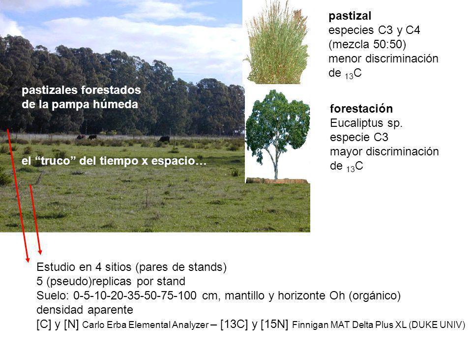 pastizales forestados de la pampa húmeda el truco del tiempo x espacio… pastizal especies C3 y C4 (mezcla 50:50) menor discriminación de 13 C forestac