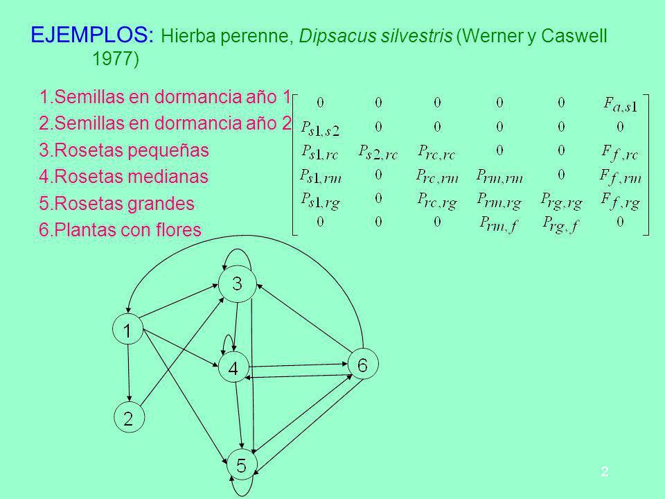 2 EJEMPLOS: Hierba perenne, Dipsacus silvestris (Werner y Caswell 1977) 1.Semillas en dormancia año 1 2.Semillas en dormancia año 2 3.Rosetas pequeñas