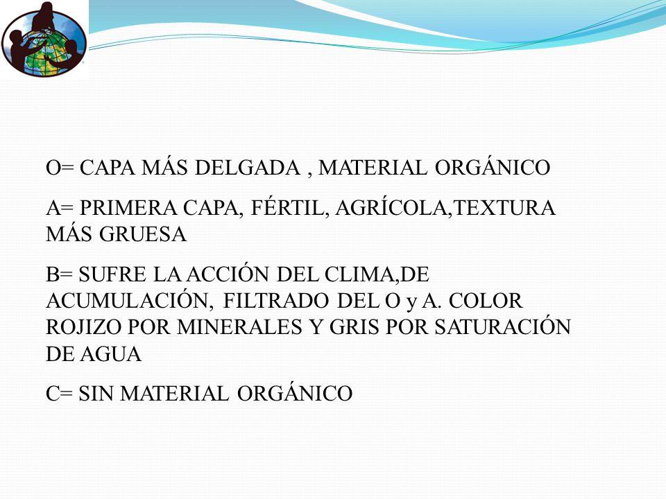 O= CAPA MÁS DELGADA, MATERIAL ORGÁNICO A= PRIMERA CAPA, FÉRTIL, AGRÍCOLA,TEXTURA MÁS GRUESA B= SUFRE LA ACCIÓN DEL CLIMA,DE ACUMULACIÓN, FILTRADO DEL O y A.