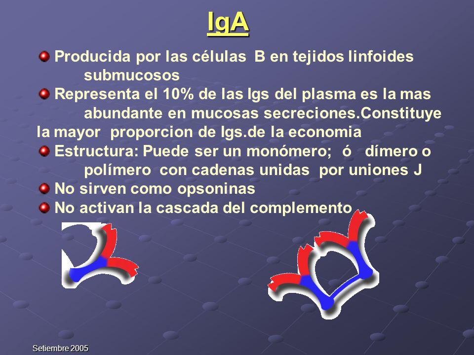 Setiembre 2005 Producida por las células B en tejidos linfoides submucosos Representa el 10% de las Igs del plasma es la mas abundante en mucosas secr