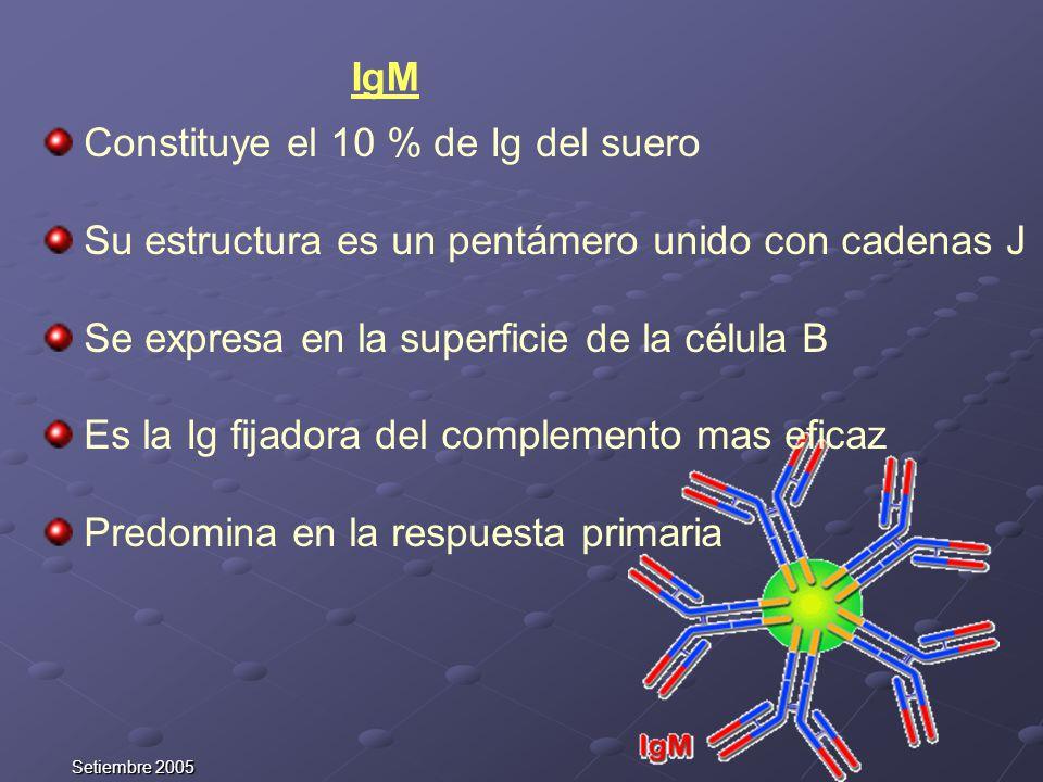 Setiembre 2005 IgM Constituye el 10 % de Ig del suero Su estructura es un pentámero unido con cadenas J Se expresa en la superficie de la célula B Es