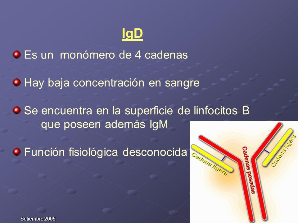 Setiembre 2005 IgD Es un monómero de 4 cadenas Hay baja concentración en sangre Se encuentra en la superficie de linfocitos B que poseen además IgM Fu
