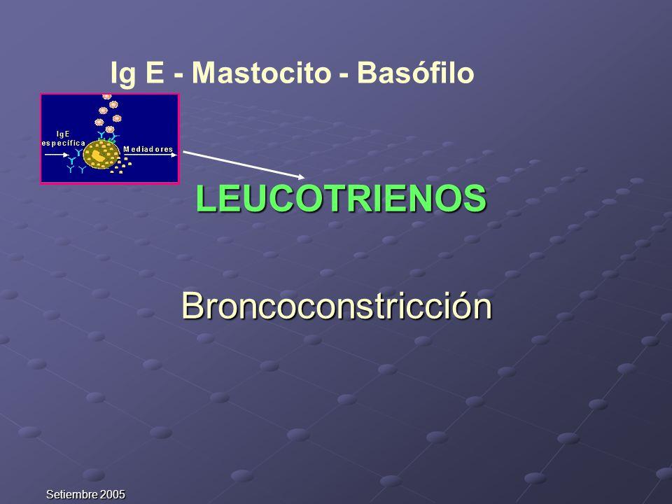 Setiembre 2005 LEUCOTRIENOS LEUCOTRIENOSBroncoconstricción Ig E - Mastocito - Basófilo