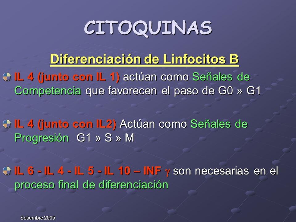 CITOQUINAS Diferenciación de Linfocitos B IL 4 (junto con IL 1) actúan como Señales de Competencia que favorecen el paso de G0 » G1 IL 4 (junto con IL