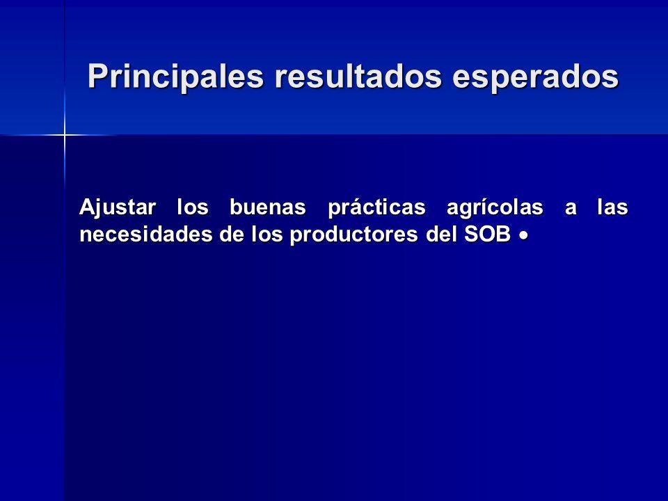 Principales resultados esperados Ajustar los buenas prácticas agrícolas a las necesidades de los productores del SOB Ajustar los buenas prácticas agrícolas a las necesidades de los productores del SOB