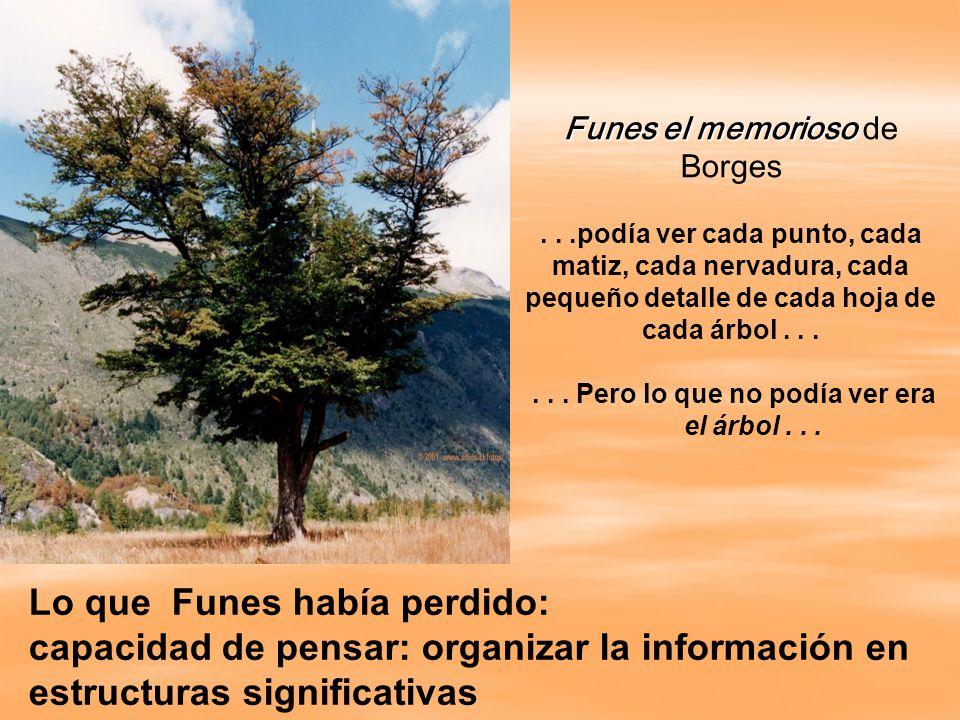 Funes el memorioso Funes el memorioso de Borges...podía ver cada punto, cada matiz, cada nervadura, cada pequeño detalle de cada hoja de cada árbol......