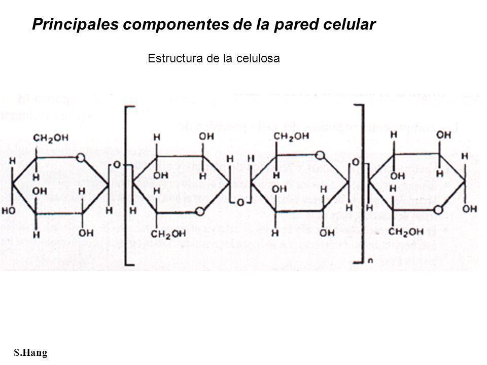 Estructura de la celulosa S.Hang Principales componentes de la pared celular