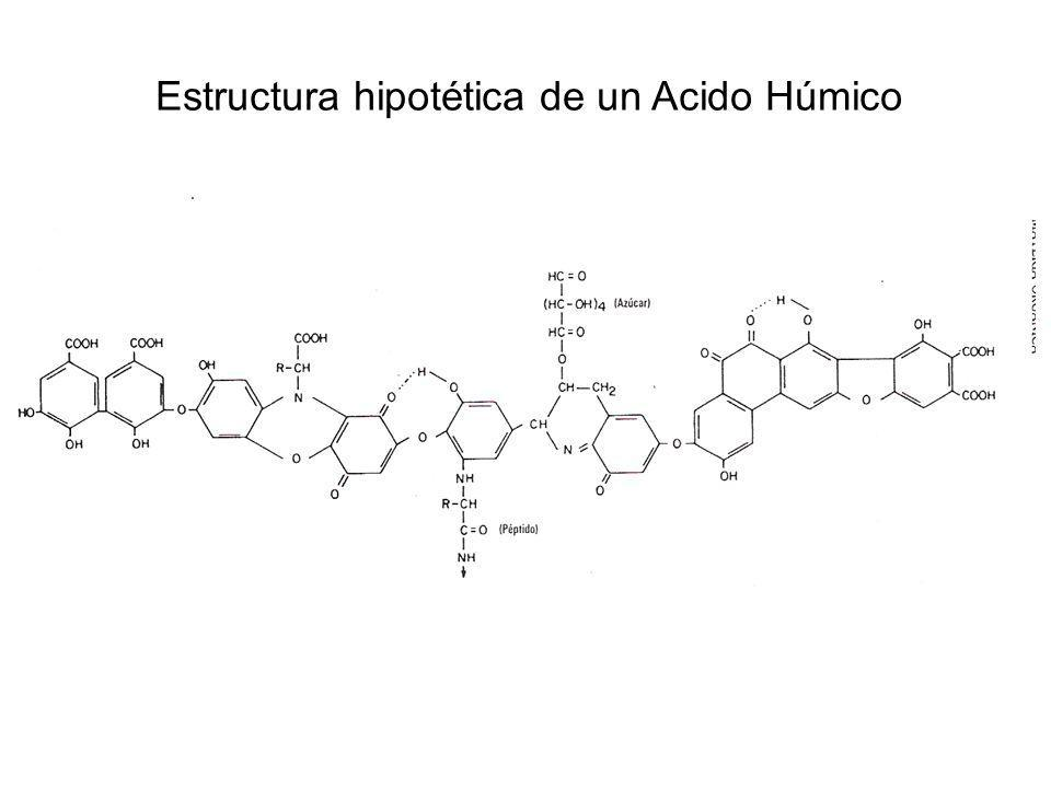 Estructura hipotética de un Acido Húmico