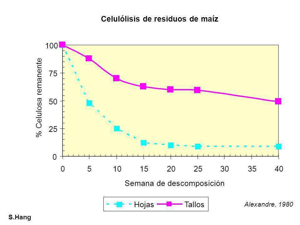 Comparación entre la composición de la MOS y de los RV %Peso Organismos Ceras, Grasas, Resinas ProteínasCelulosa Hemicelulosa, carbohidratos Lignina y derivados C/N Leguminosas herbáceas Raíces Hojas 10-1210-15 12-20 20-25 15 25-30 10-12 10-15 5 - 12-16 Gramíneas Perennes Raíces 5-125-1025-30 15-20 Árboles caducifolios Hojas Maderas 3-5 - 4-10 0.5-1 15-25 40-50 10-20 20-30 10 20-25 40-50 - Coníferas Hojas Maderas 20-25 - 5-7 0.1-1 20 45-50 15-20 15-25 15 25-30 60-70 - Bacterias-40-70-Mucosidad-8-12 Musgos-5-1015-2530-60no- Algas-10-155-1050-60-- MOS0.8-7.730-353-55-1230-508-15