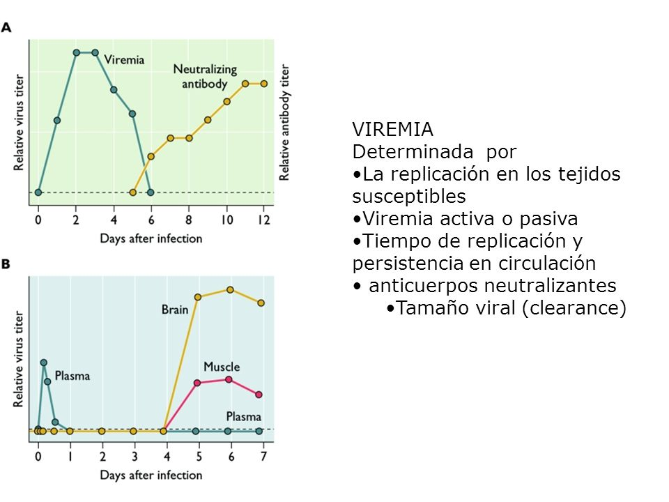 VIREMIA Determinada por La replicación en los tejidos susceptibles Viremia activa o pasiva Tiempo de replicación y persistencia en circulación anticue