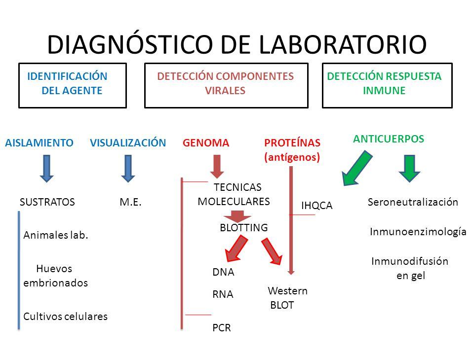 DIAGNÓSTICO DE LABORATORIO IDENTIFICACIÓN DEL AGENTE DETECCIÓN COMPONENTES VIRALES DETECCIÓN RESPUESTA INMUNE AISLAMIENTOVISUALIZACIÓNGENOMA SUSTRATOS