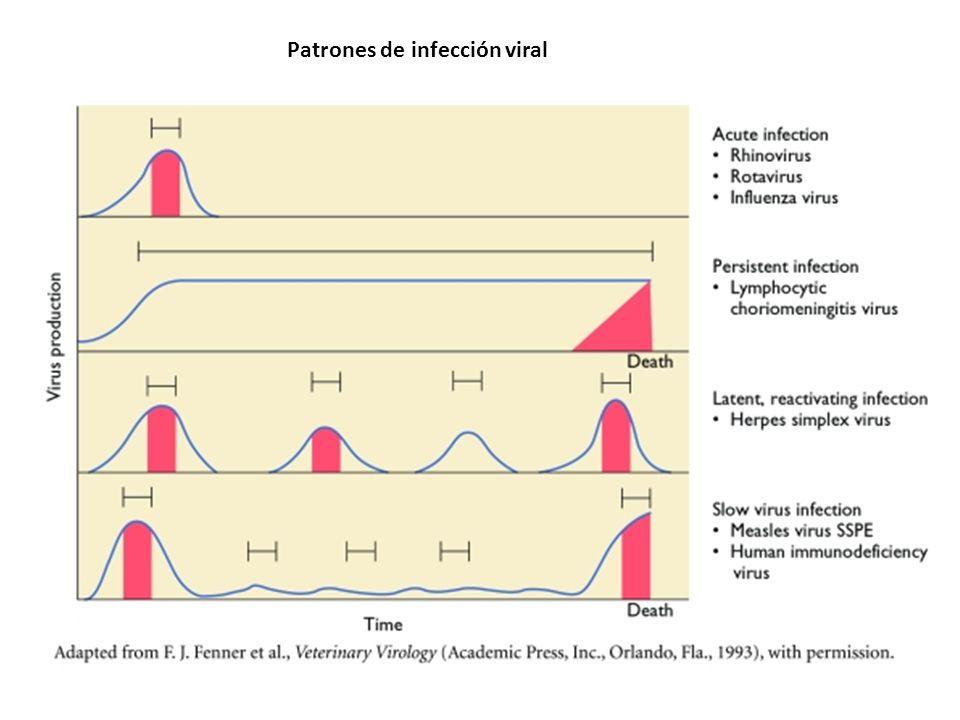 Determinantes de la infectividad viral Características de la enfermedad Vía de ingreso viral al organismo Habilidad para llegar al órgano/ tejido blanco Tropismo / cepa viral actuante Susceptibilidad de la célula a la infección Severidad de l cuadro Virulencia del agente/ dosis infectante Respuesta inmune del hospedador Estado general del animal / selección genética Otras infecciones que pueden afectar la rta.inmune