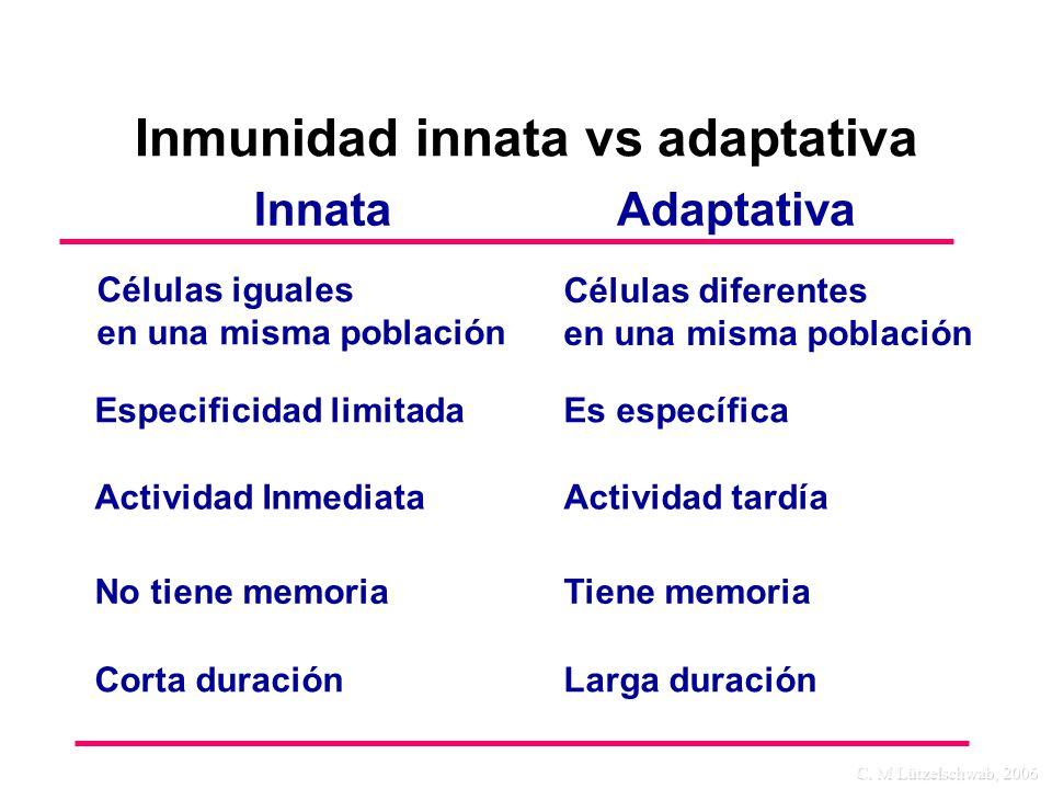 C. M Lützelschwab, 2006 InnataAdaptativa Especificidad limitadaEs específica Actividad InmediataActividad tardía No tiene memoriaTiene memoria Corta d