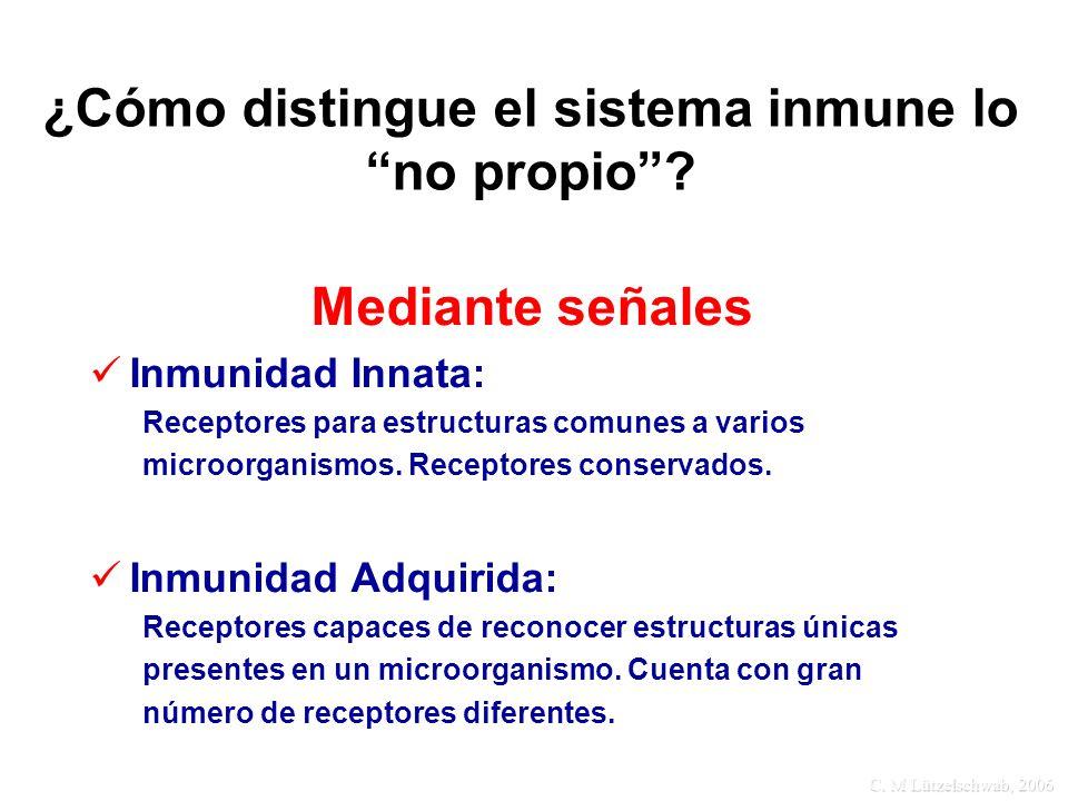 C. M Lützelschwab, 2006 ¿Cómo distingue el sistema inmune lo no propio? Mediante señales Inmunidad Innata: Receptores para estructuras comunes a vario