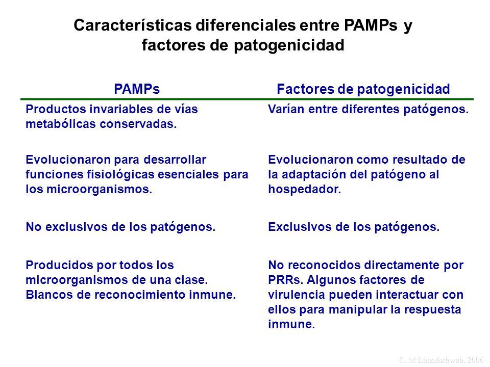 C. M Lützelschwab, 2006 Características diferenciales entre PAMPs y factores de patogenicidad PAMPsFactores de patogenicidad Productos invariables de