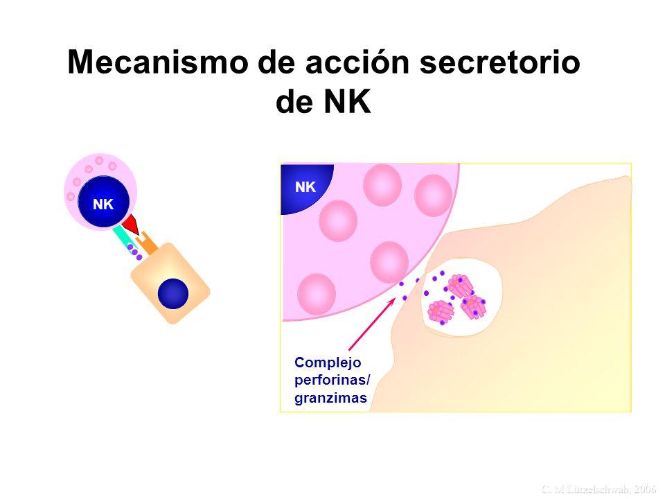 Mecanismo de acción secretorio de NK NK Complejo perforinas/ granzimas NK