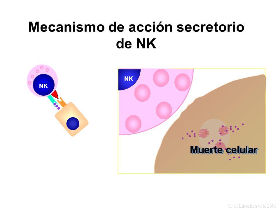 C. M Lützelschwab, 2006 Mecanismo de acción secretorio de NK NK Muerte celular