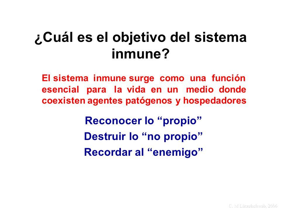 C. M Lützelschwab, 2006 ¿Cuál es el objetivo del sistema inmune? Reconocer lo propio Destruir lo no propio Recordar al enemigo El sistema inmune surge