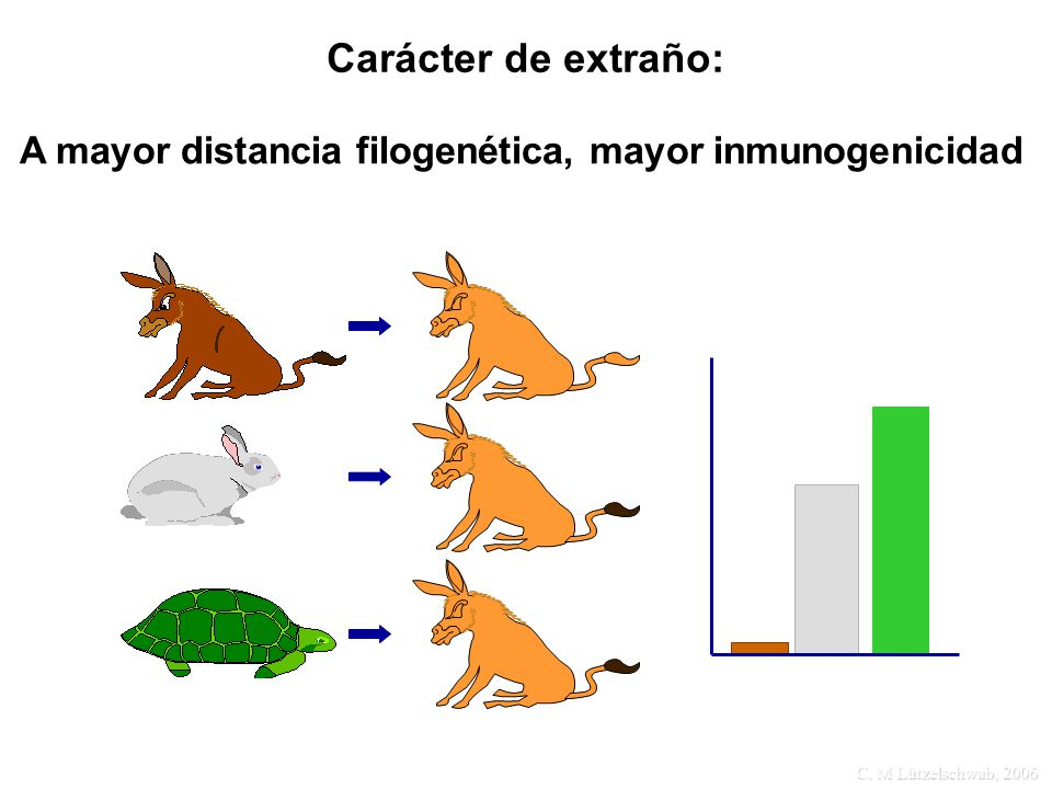 C. M Lützelschwab, 2006 A mayor distancia filogenética, mayor inmunogenicidad Carácter de extraño: