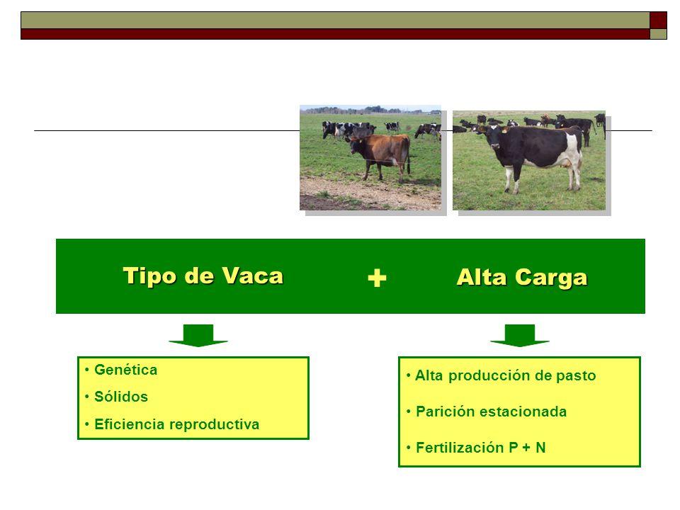 Tipo de Vaca + Alta Carga Genética Sólidos Eficiencia reproductiva Alta producción de pasto Parición estacionada Fertilización P + N
