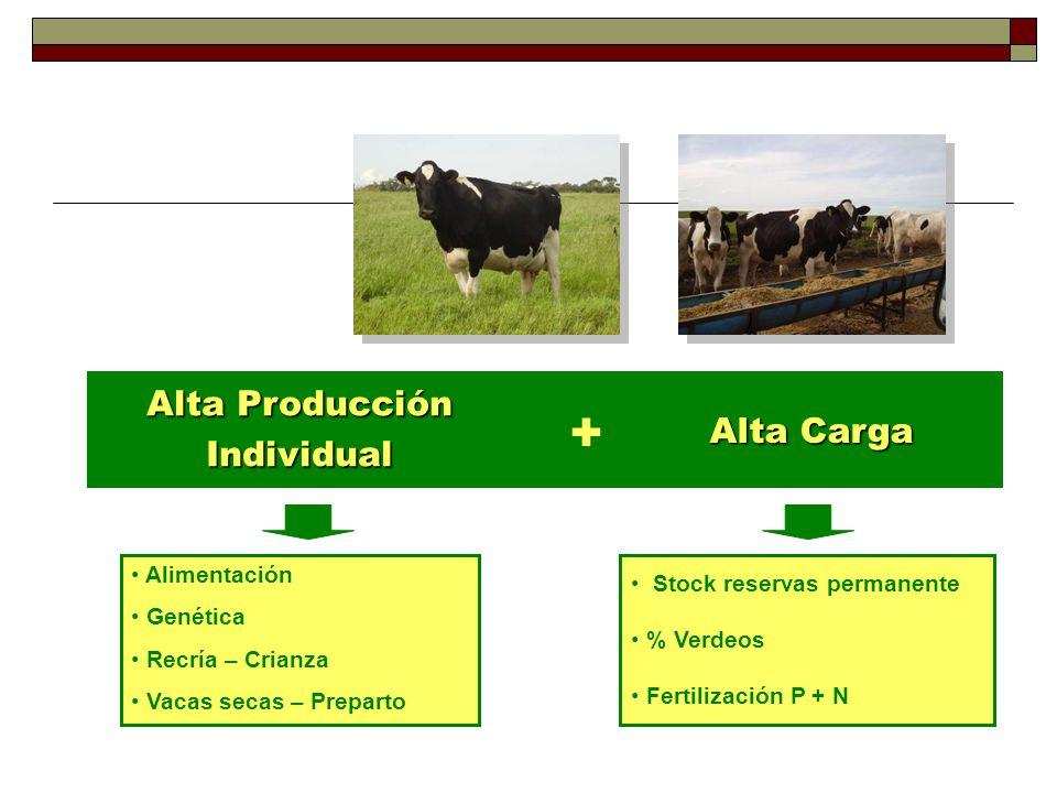 Alta Producción Individual + Alta Carga Alimentación Genética Recría – Crianza Vacas secas – Preparto Stock reservas permanente % Verdeos Fertilización P + N