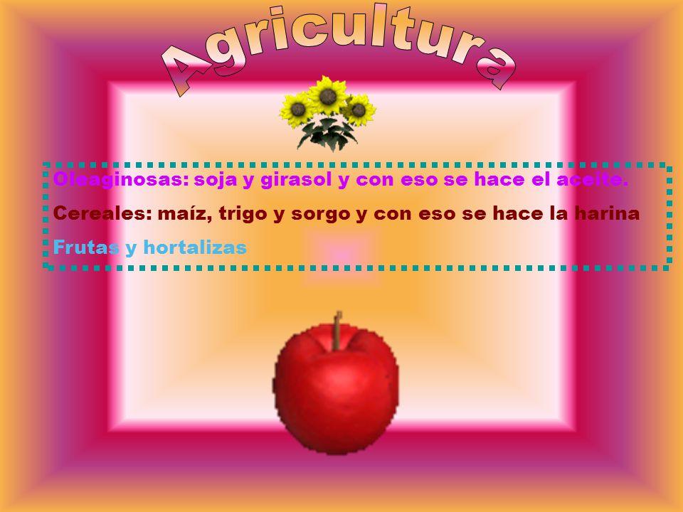 Oleaginosas: soja y girasol y con eso se hace el aceite. Cereales: maíz, trigo y sorgo y con eso se hace la harina Frutas y hortalizas