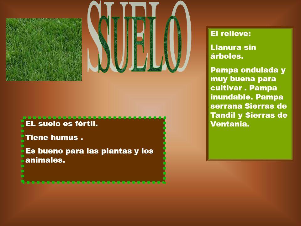 EL suelo es fértil. Tiene humus. Es bueno para las plantas y los animales. El relieve: Llanura sin árboles. Pampa ondulada y muy buena para cultivar.