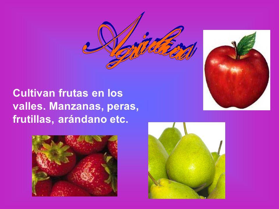 Cultivan frutas en los valles. Manzanas, peras, frutillas, arándano etc.