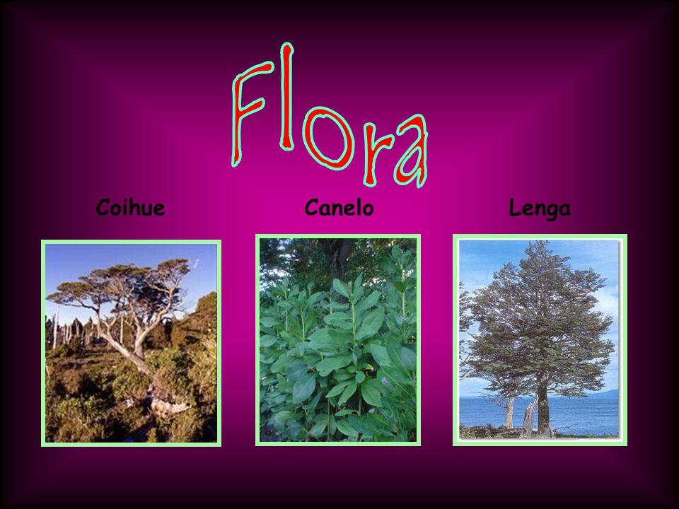 Mas flora: Mata Negra Arbustos