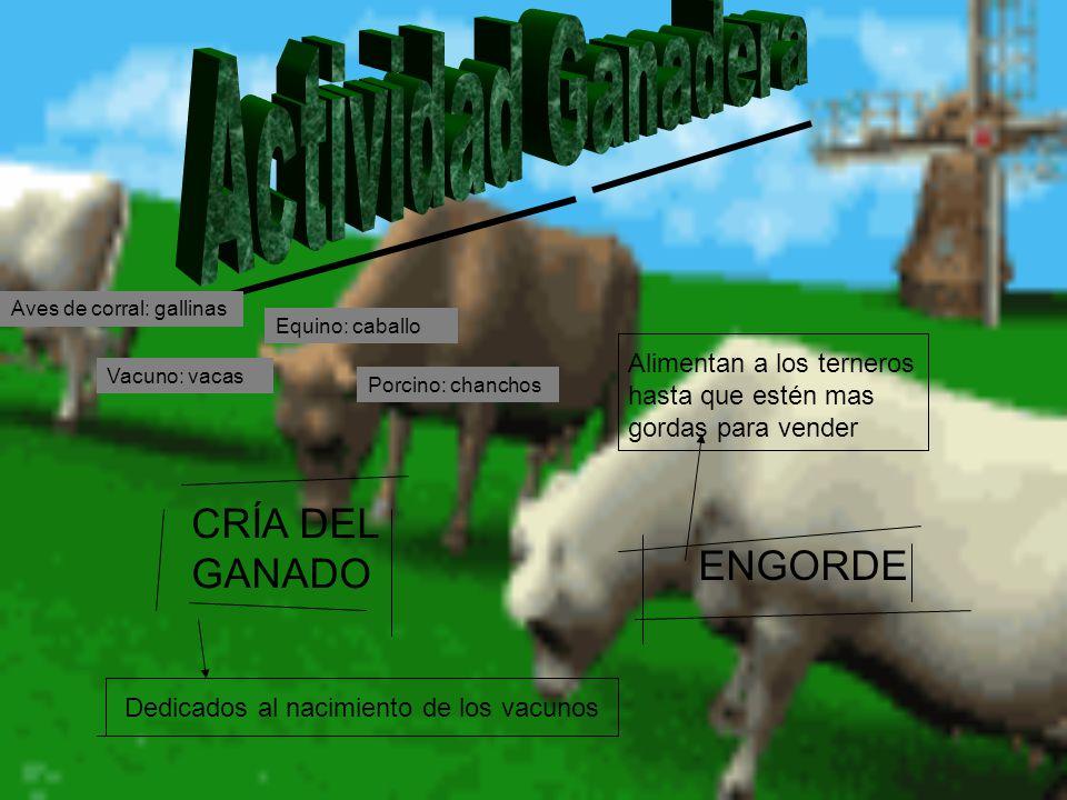 CRÍA DEL GANADO Dedicados al nacimiento de los vacunos ENGORDE Alimentan a los terneros hasta que estén mas gordas para vender Equino: caballo Vacuno: vacas Porcino: chanchos Aves de corral: gallinas