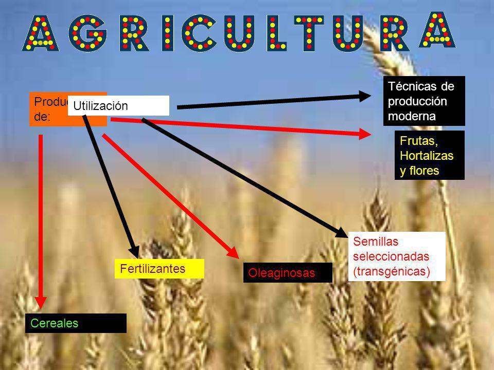 Producción de: Cereales Oleaginosas Frutas, Hortalizas y flores Utilización Fertilizantes Semillas seleccionadas (transgénicas) Técnicas de producción moderna