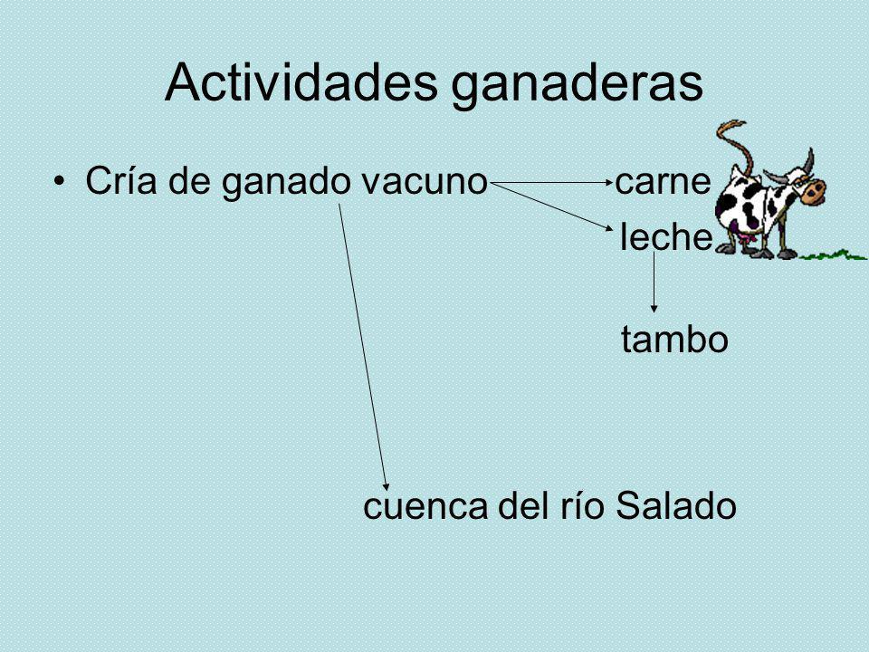 Actividades ganaderas Cría de ganado vacuno carne leche tambo cuenca del río Salado