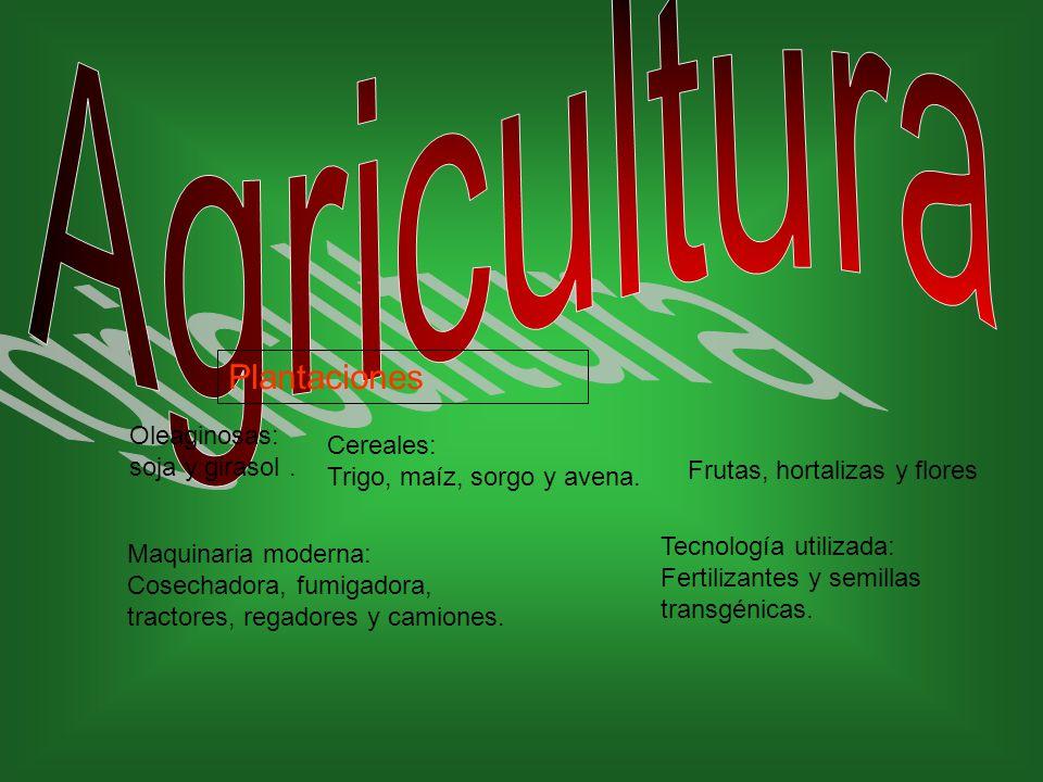 Oleaginosas: soja y girasol.Plantaciones Cereales: Trigo, maíz, sorgo y avena.