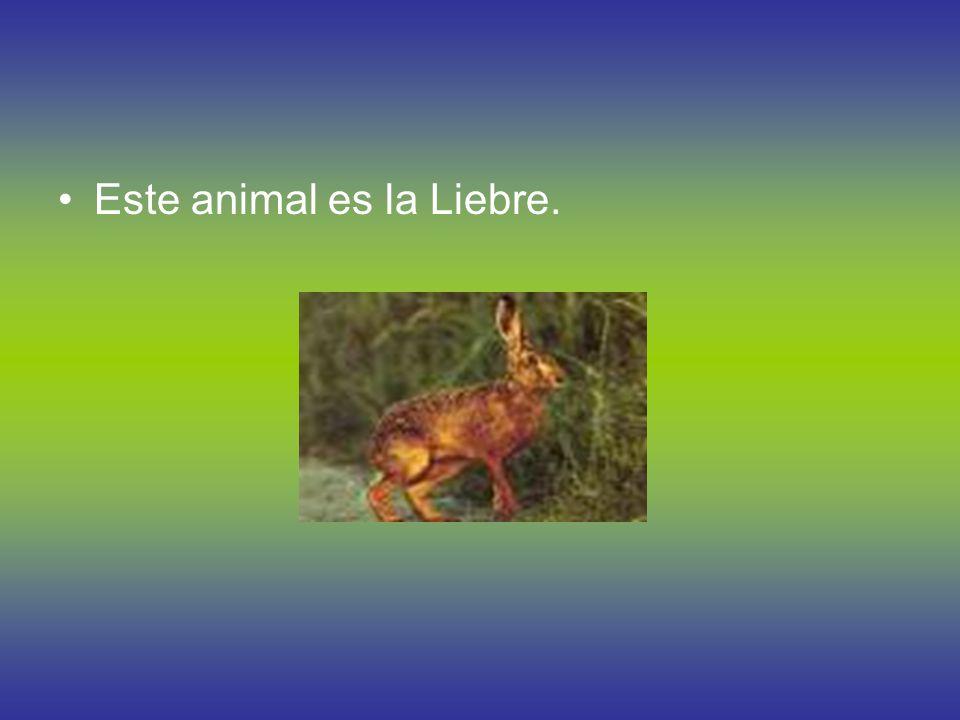 Animales Patagónicos Estos son otros animales Patagónicos. El Elefante Marino, La Rata Gris y El Puma