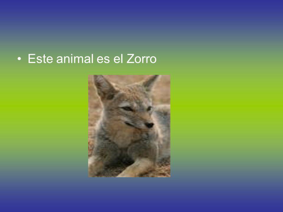 Este animal es la Liebre.