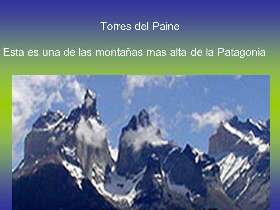 Ballenas En la Patagonia hay muchas ballenas