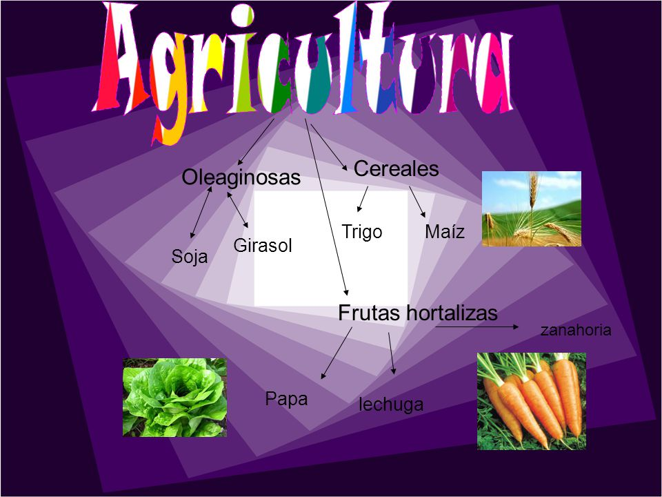 Cereales TrigoMaíz Soja Girasol Oleaginosas Frutas hortalizas Papa lechuga zanahoria