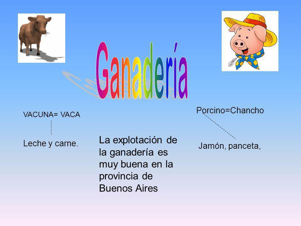 VACUNA= VACA Leche y carne. Porcino=Chancho Jamón, panceta, La explotación de la ganadería es muy buena en la provincia de Buenos Aires