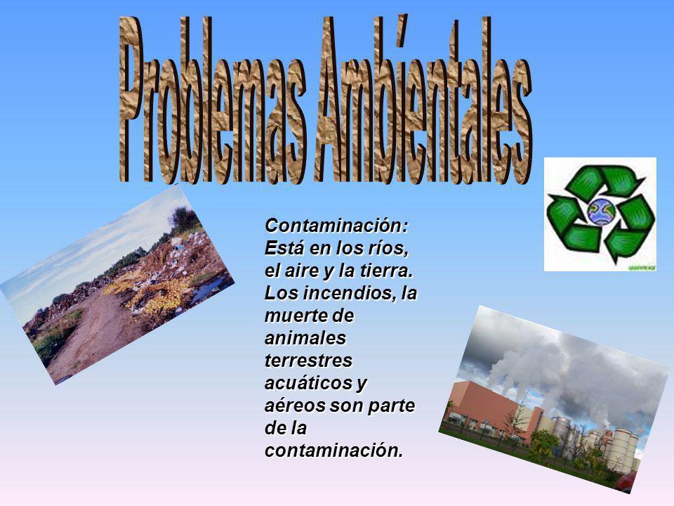 Contaminación: Está en los ríos, el aire y la tierra. Los incendios, la muerte de animales terrestres acuáticos y aéreos son parte de la contaminación