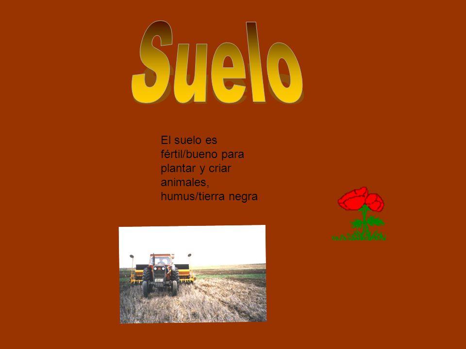 El suelo es fértil/bueno para plantar y criar animales, humus/tierra negra